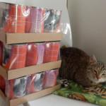 Strom splněných kočičích přání